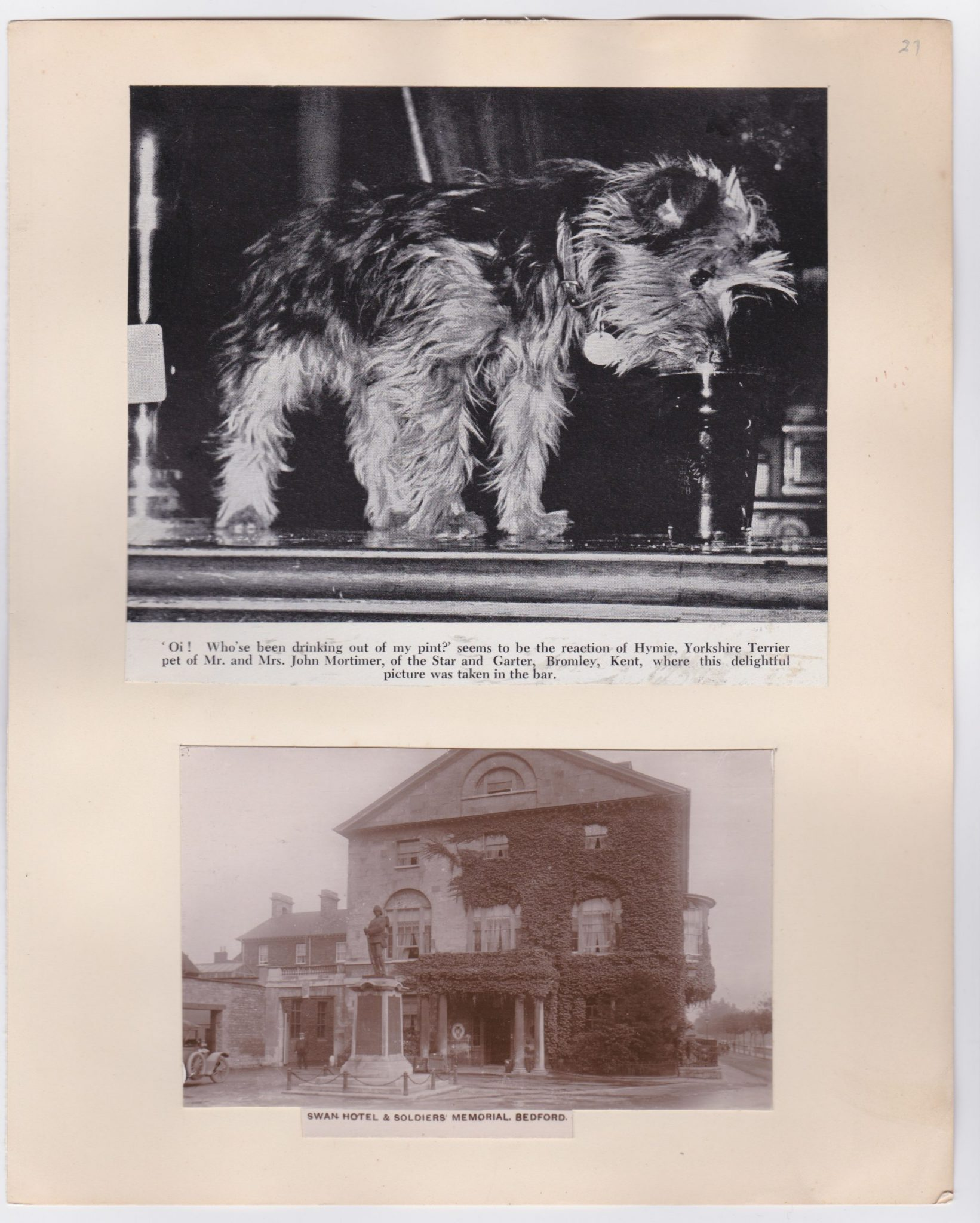 One old postcard of the Swan Hotel Bedford and an image of a dog drinking a pint at the bar of the Star and Garter kent.